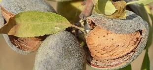 delikatessen-zürich-delikatessenhändler-mandeln-largueta