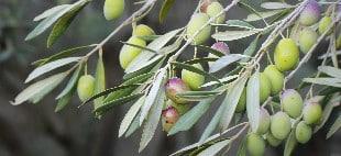 delikatessen-zürich-delikatessenhändler-olivenöl-1