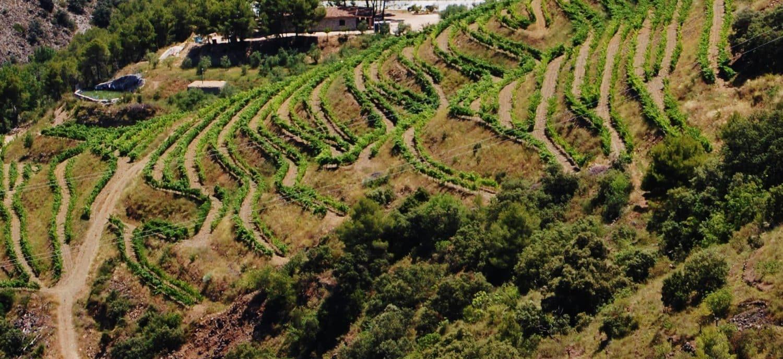 weinhandel zürich Weinhandlung Donat Gut Priorat