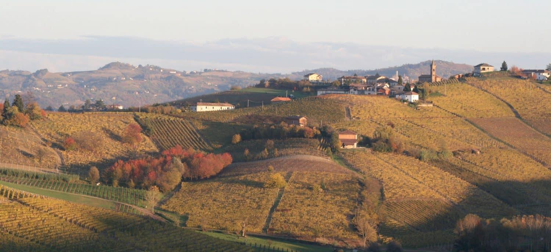 weinhandel zürich Weinhandlung Donat Gut Weinberge Piemont