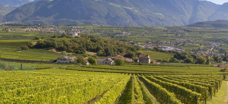 Weinhandel Zürich Weinhandlung Donat Gut Weine Südtirol
